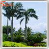 擬似人工的な王ヤシの木を美化する庭
