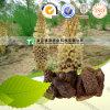 Herba natural puro Cistanches da medicina da erva de 100%