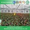 Serre chaude de film plastique pour l'agriculture
