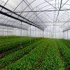 식물성 작물을%s 좋은 농업 필름 온실