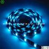 Helles Color Blue 5050 Flexible LED Strip mit UL/RoHS