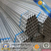 ERW Pre-Galvanized Pipe y Tube para Greenhouse