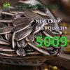 長いタイプ5009およびローストのための最もよい価格のヒマワリの種
