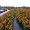 Stuoia di controllo di Weed, copertina al suolo di Cover/PP Per il giardino/esportazione alla copertura al suolo dell'Europa
