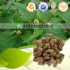 Materia prima naturale Achyranthes Longifolia della medicina di erbe