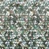 貝のタイル(PHMP202)