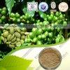 Acides chlorogéniques du meilleur des prix de vert extrait de grain de café 50%