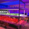 La serra LED di alta qualità coltiva l'illuminazione per idroponico