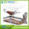 Venda por atacado acrílica do alimentador do pássaro do indicador desobstruído com forma da casa