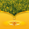 Aceite de Canola del aceite de rabina del origen de China
