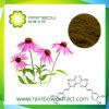 Echinacea Extract Polyphenols 4% van Purpurea van Echincea Zuur Chicoric