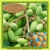 Polvere dell'estratto della frutta di Terminalia Chebula P.E/Myrobalan P.E/Terminalia Chebula