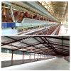 Chambre ouverte de production de poulet de structure métallique dans l'endroit tropical
