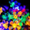 [20لد] شمسيّ يزوّد ماء دراق زهرة خيط ضوء ([رس1020])