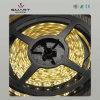 Luce della corda del LED (SL-F1214Y60)
