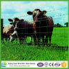 Draht-Vieh-Bereich-Zaun des Australien-Standard-2.5mm