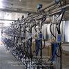 Система салона метра молока подачи шевронная доя для коров