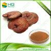 Polisacáridos de la seta P.E/Ganoderma Lucidum P.E de Reishi: 10%-50%