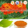 Kaltes wasserlösliches Mikrokapsel-Lutein Parvisaccites des Ringelblume-Auszug-5%