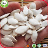 Graines de citrouille blanches sèches par collecte neuve de neige