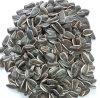 Semences d'oiseaux de graines de tournesol de Jngogo