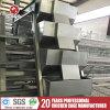 Cages de /Battery de matériel de la ferme d'animaux pour les couches (A4L120)