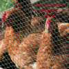 Pollo Wire Mesh Chicken Wire Mesh Made in Cina Factory