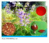 Protocatechuic Aldehyde Protocatechualdehyde van het Uittreksel van Miltiorrhiza van Salvia