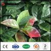 가정 작은 정원 인공적인 잎 플라스틱 담