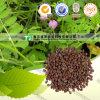 製造業者の供給の高品質の粗野な薬のFlastem Milkvetchのシード