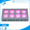 Large spectre DEL Grow Lights pour Plants Growing