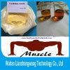 Injizierbares Trenbolone Azetat-Steroid Puder 10161-34-9 Finaplix für Muskel-Wachstum
