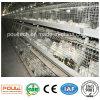 Système de cage de poulet à rôtir de qualité pour des fermes avicoles