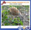 Обеспеченность охраны животных гальванизировала сваренную загородку ячеистой сети