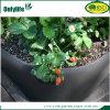 Onlylife Hausgarten-wachsen Breathable quadratische Oxford-Erdbeere Beutel