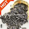 Hete Zaden Van uitstekende kwaliteit van de Zonnebloem van de Verkoop Organische 5009