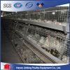 Migliore gabbia di strato del fornitore della fabbrica di vendita/gabbia della griglia/gabbia della pollastra