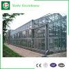 野菜栽培のための商業ガラス庭の温室