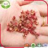 Pimenta vermelha chinesa de Sichuan do preço barato