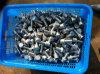 Сопло стрейнера фильтра воды SUS304/переменчивый патрон фильтра