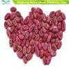 Magic Message Beans Seeds Diversión Novedad Gift Crezca Su Propio Mensaje de Palabra
