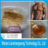 Steroidi ammassanti CAS 10161-34-9 del ciclo dell'acetato di Trenbolon per il Bodybuilder