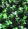 Protection UV Artificial Green Leaves Hedge per Decoration (MW16033)