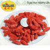 Bacca rossa del Ningxia Goji della nespola