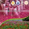 Pétalos de Rose orgánicos secados registrados FDA de la categoría alimenticia