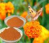 Luteína orgánica del extracto de la planta de la flor de la maravilla para los ojos CAS 127-40-2