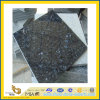 Polished naturale Imported Blue Pearl Granite Tile per Wall/Flooring (YQC)