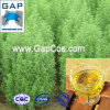 Gasolina de absintio de la artemisia de la fuente del fabricante