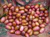 Shallot китайского нового урожая свежий для ехпортировать