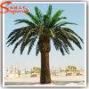 Albero di plastica artificiale della palma da datteri della decorazione dell'hotel
